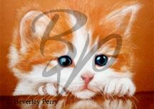 Bright Eyes - Pastel