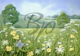 Buttercup Meadow - Pastel