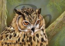 Eagle Owl - Pastel