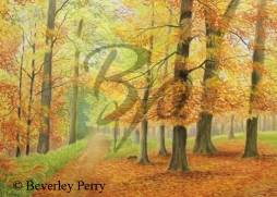 Forest of Dean - Pastel