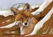 Foxy - Pastel