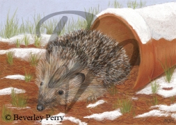 Hedgehog - Pastel