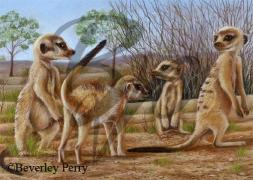 Meerkat Meeting - Pastel