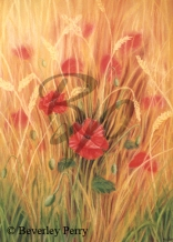 Poppies - Pastel