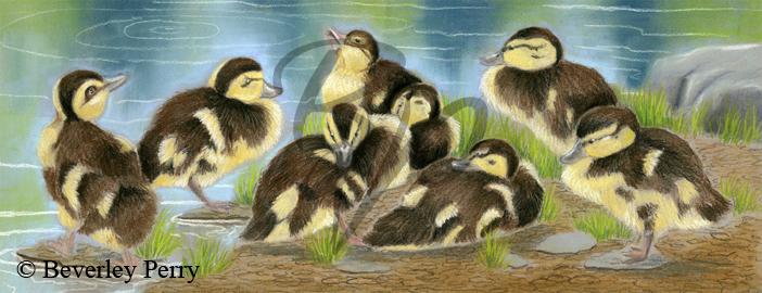 Quackers - Pastel