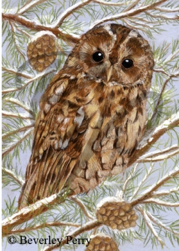 Tawny Owl - Pastel