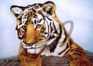 Tiger - Pastel