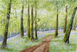 bluebell dream