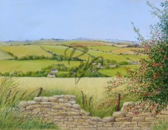 cotswold pastures