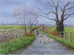 Gathering the strays